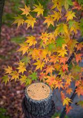 Beautiful autumn color change in Eikando temple, Kyoto, Japan.