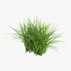 Grass isolated on white. 3D illustration