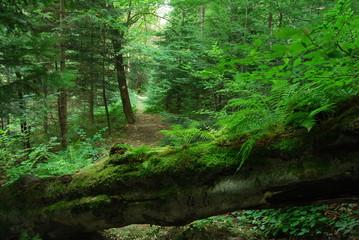 Keuken foto achterwand Bos in mist Magurski Park Narodowy, Sciezka Przyrodnicza