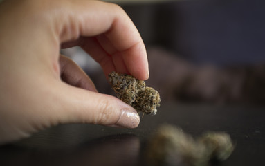 Close up of woman's hand holding cannabis bud