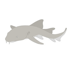 Natural nurse shark vector illustration isolated on white