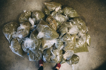 Dispensary: wholesale bags of cannabis