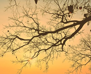 Autumn tree and gold sky background