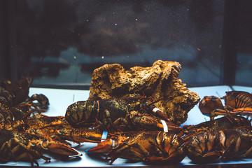 Lobster in the aquarium