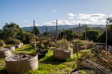 Scenic view of cannabis farm