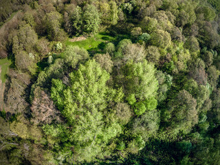 Predominantly deciduous forest from a bird's eye view. Trees with young foliage. Spring. Clear day. Yaroslavl region. Russia
