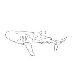 Aquatic Animals Shark Whale Drawing Illustration