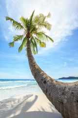 Fototapete - travel background. Sun glowing though palm branches on secluded beach with white sand