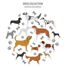 Hunting dog breeds collection isolated on white. Flat style