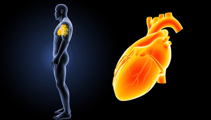 Heart zoom with body lateral view