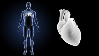 Heart zoom with body anterior view