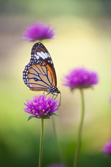 Butterfly flower and beautiful nature.