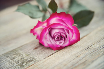 Pink roses on wooden background. Rustic style