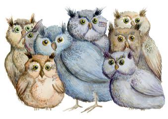 Owls. Hand drawn watercolor illustration