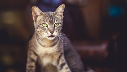 A sassy petulant cat.