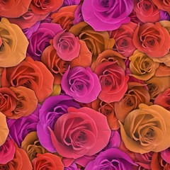 Colorful background with rose flower.