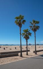 Tree palms on the puplic beach in California
