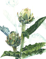 Artichoke plant botanical drawing watercolor painting illustration isolated on white background