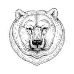 Cool fashionable polar bear Image for tattoo, logo, emblem, badge design