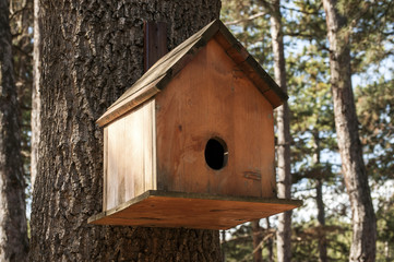 Wooden bird house closeup on oak tree