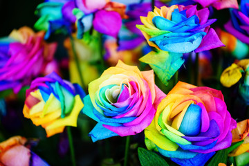 colorful rainbow roses