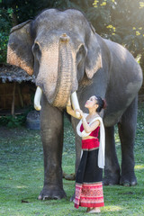 Pretty asian girl in traditional thai dress touching elephant's trunk