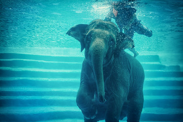 Swimming Elephant Underwater. Asian elephant in ocean with mirrors and ripples at water surface.