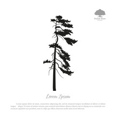 Black silhouette of a pine on a white background