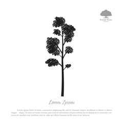 Black silhouette of a tree on a white background. Forest trees