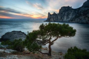 pine Crimea