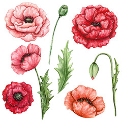 Set of Watercolor Red and Pink Poppies, Buds and Leaves