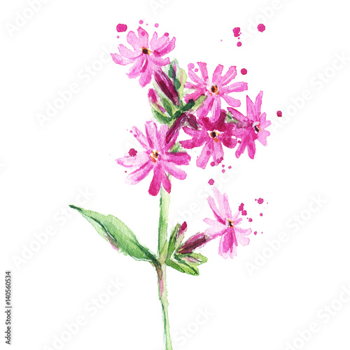 Beautiful Pink Summer Single Flower On A Thin Stalk Watercolor Illustration