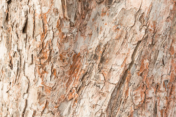 Rough texture of the thick bark of the apple tree, over the surface of many cracks that form the wood cells, an abstract background