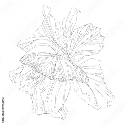 Continuous Line Drawing Flowers : Quot beautiful flowers line art continuous drawing
