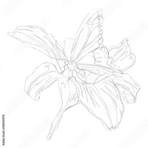 Beautiful Flower Line Drawing : Quot beautiful flowers line art continuous drawing