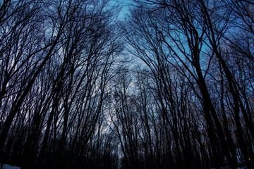 Winter beautiful wood
