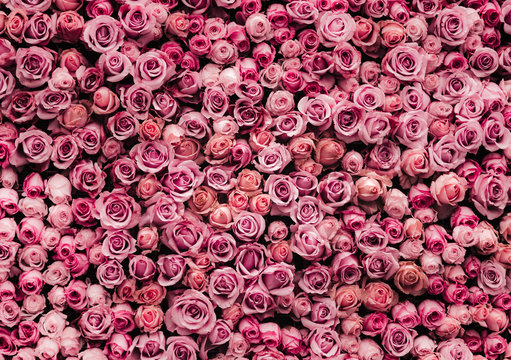 flowers wall background with amazing roses