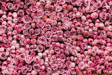 Foto auf Leinwand Roses flowers wall background with amazing roses