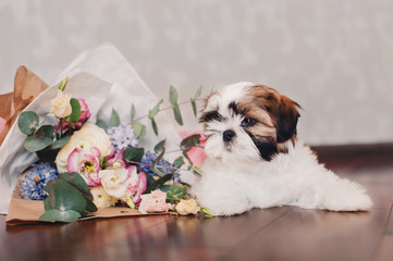 Sleepy Shih-tzu puppy with bouquet of tender colored flowers