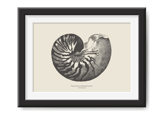 retro vector illustration: vintage drawing of a nautilus - beautiful sea / ocean themed graphic design element, perfect for posters or other print projects