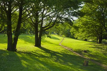 公園 新緑
