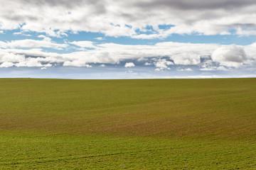 Campo sembrado de alfalfa y cielo con nubes. Los Oteros, León, España.