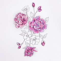 Sketch of a purple peony on a white background.