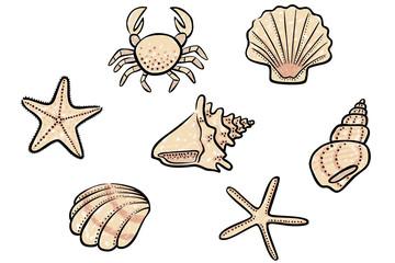 Set: Farbige Zeichnung Muschel, Seestern, Schneckenhaus / handgezeichnet, Vektor, freigestellt