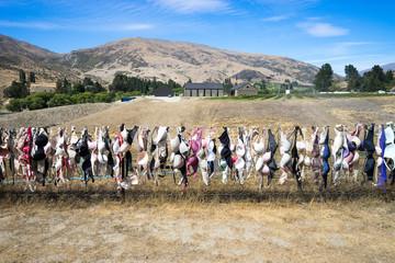 landmark bras fence in new zealand