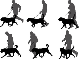 man training dog,preparing dog for exhibition silhouettes - vector