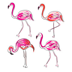Hand drawn sketch pink flamingo vector set. Exotic birds isolated on white with outline strokes and coral brush strokes decor.