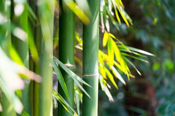 het bamboebos