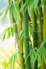 Spoed Foto op Canvas Bamboo the bamboo forest