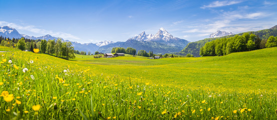 Poster Weide, Moeras Idyllic landscape in the Alps with blooming meadows in summer